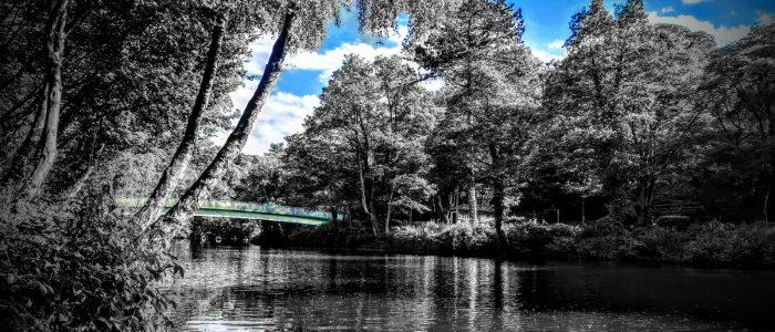 River Derwent with Bridge and Ducks